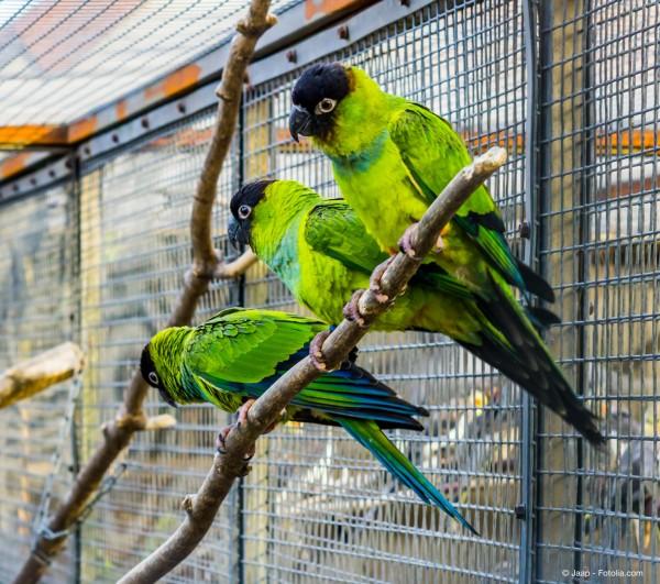 In-einer-Vogelvoliere-aus-Edelstahl-leben-ihre-Voegel-sicher